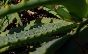Vegetation-subtropen