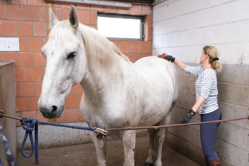 pferd-striegeln
